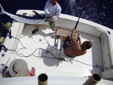 Report of the 01 august 2014 ----------------------------------------------- Brasilia and Nola fishing Azores bank , Xacara and Brasilia 2 fishing condor, Makaira do a movie with the BBC. Brasilia 2: 1/2 whites Xacara: 0/2 whites Brasilia: 2/5 whites Nola: 1/5 whites but finaly we caught a nice bigeye tuna around 250lbs.The tuna eats the Bonze Violator. Photos out of Nola.