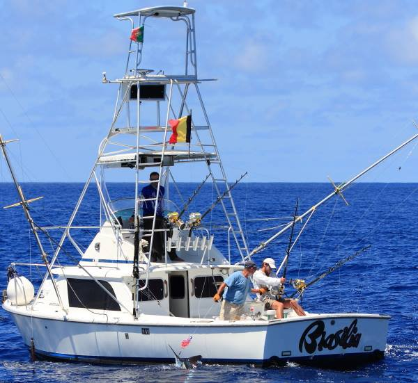 Report of the 2 august 2014 ------------------------------------- Today, 3 boats of our company in Azores bank. Xacara was the luckiest with one blue 300lbs , one white and one bigeye tuna,nice. Congats Olaf. Brasilia 2, whites but don't know exact catch. Nola: 3/6 whites Brasilia was in Sao Jorge and released one white. Photos Olaf and Marco.