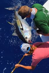 08.08.2014 We started targeting the whites and it worked ok. We caught 11 out of 15 bites and raised 9 more after running out of bait. We also pulled the hook on a 350 pound blue marlin and shortly later we raised on simillar size maybe the same one. Finally we caught a big eye tuna as well. Good day. — à Horta, avec Marty Bates et 2 autres personnes. (7 photos