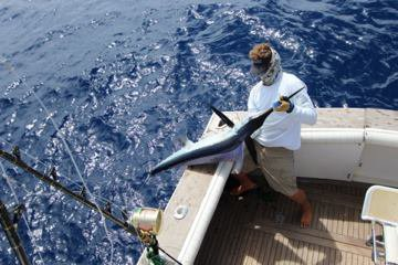 Report of the 21 august 2014 ---------------------------------------- Today, 3 boats fishing Azores bank, Xacara 2/3 whites, Makaira,1/2 white. I was on Brasilia because Nola at works and we do a 2/3 whites, 0/1 blue marlin.Brasilia 2 at works. Photo with Dani and a white.