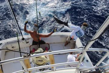 Report of the 3 september 2014 --------------------------------------------------- Today, all fishing Condor. That's Makaira one time more with our 2 Hollandaises clients , Hein and Sjoerd who open the game wit a very nice 600lbs, congrats to anglers and crew.After really slowly , baits , birds and full od dolphins but no marlin. At 5 pm, Nola has a hook up with a 300lbs, Art do a good job and we released the fish. On the way back,at 6pm, second hook up for Nola and it was Suzane on the chair same good job, released a 300 lbs blue marlin. Makaira: 1/1 blue and Nola 2/2 blues.Good job Dani and Lionel.