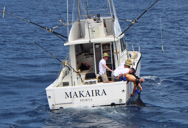 Report of the 5 august 2015 ------------------------------------------- No luck for paty, pull hook on a nice blue just arriving on Condor. For the rest,that's the white marlins day, Brasilia released a white , Xacara raised some and Nola pull the hook on one.  Photo is really nice shot of Makaira.
