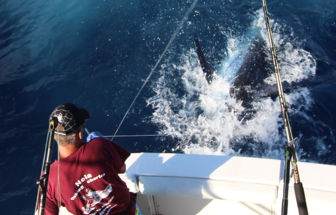Report of the 23 september 2015 ---------------------------------------------- Today Nola was fishing a short day , we started at 12 and arrived near Castello Branco at 12:30, ten minutes later we hooked up with a blue and released a 350lbs. End of the day second bite , we released a 500lbs. Super job by Yvan and Paty on the chair.2/2 for Nola and 4/4 last 3 days. Brasilia on Azores 1 on 4 blue marlin.Great fishing here in Horta.