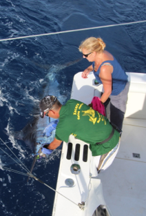 Report of the 24 september 2015 ----------------------------------------------- We start fishing at one pm, a very short fishing day for our last day. Castello Branco was our destination, 30 minutes of the marina and a nice sunny day. At 6pm, big hook up with a blue, nice fight and released of a 550lbs, good job for mate Yvan and Paty on the chair. The number 5 /5 for Nola in the last 4 days in the same place. This season is finished , will be good with very big blues. Thank you for all anglers fishing with our company in Horta Azores. Hope to see you next year. First in la Gomera , march -april to august. Second in Horta Azores, may to end of september. Booking is open for the 2 destinations.