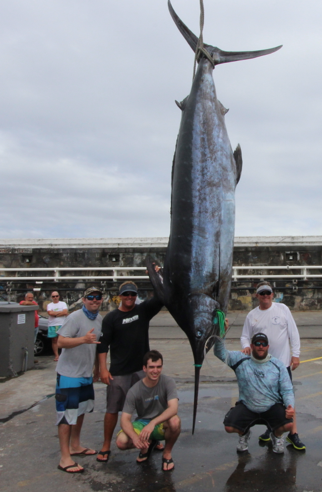 Report of the 21 august 2016 ------------------------------------------- Grander for Xacara ,Faïal Azores. After released a white and a 500lbs blue ,Xacara,captain Olaf Grimkowski, Capt mate Marty Bates and all group of sympathic anglers from Florida Brandon Messingschlager, hooked up with this 1042lbs, grander for Horta Azores.Gongrats to all.