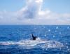 Plus de photos. Les Açores et Horta sont à 5 heures de l'Europe, nous avons 4 jours formidables à vous proposez. Contactez-nous par mail: marlin.be@skynet.be