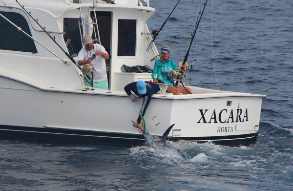 Marlin near the side of Xacara