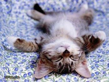 image animaux qui dorment