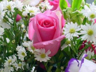 Les  10 raisons qui amènent au développement de la Mahabbah  (l'amour envers Allah)