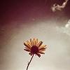 « Nos défauts sont les yeux avec lesquels nous voyons l'idéal.