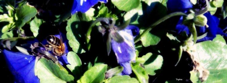 La chair des femmes se nourrit de caresses comme l'abeille de fleurs.