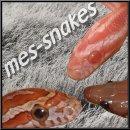 Photo de Mes-snakes