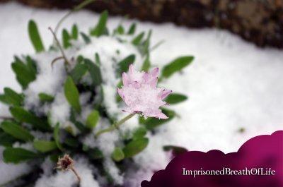 La neige o2~12~2o1o