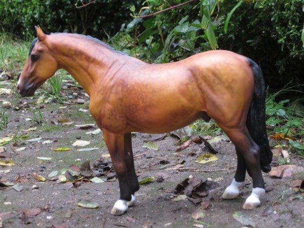 Arrticle 1 : Un cheval aux couleurs de l'automne.