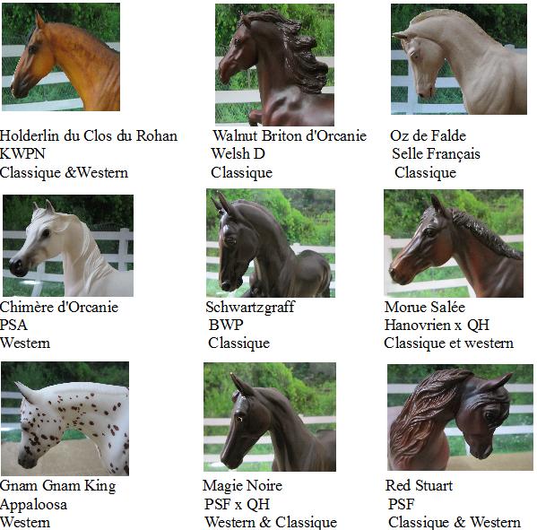 Présentations des chevaux :