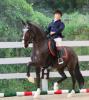 Article 30 : Un deuxième cheval au niveau pour Martin.