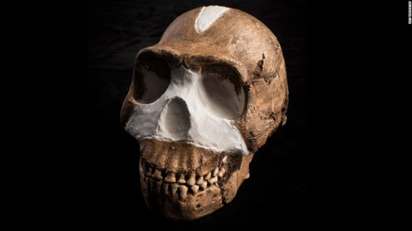 crâne d'homo naledi