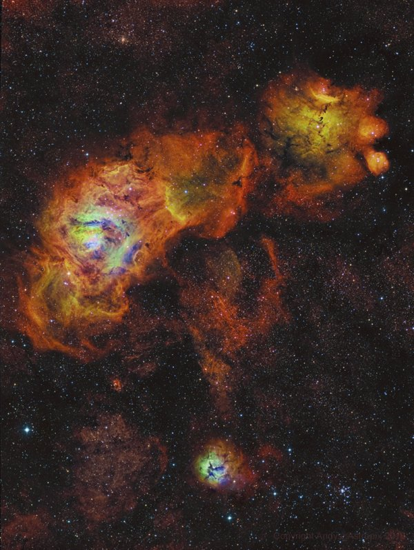 tournesols du Sagittaire