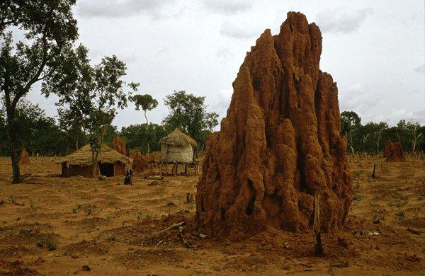 "termitière ""cathédrale"" (Mali)"