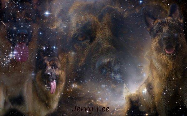 Montage de Jerry Lee ♥