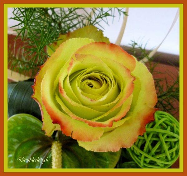 Petits anthuriums verts et rose