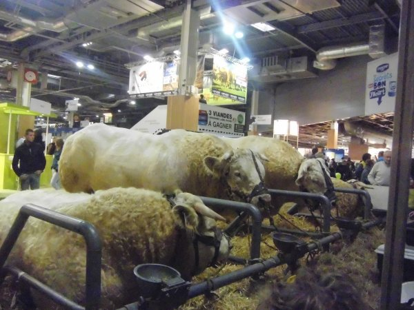 Salon de l 39 agriculture paris 2013 photo de chasse farming et p che lacher vos - Salon agriculture adresse ...