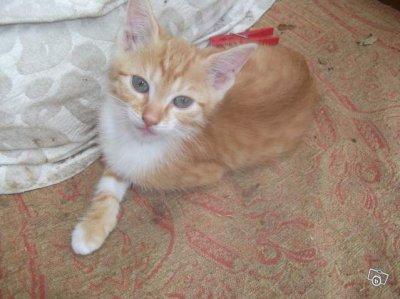 photo de mon chat  pour mon fils