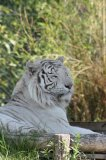 Photo de fana-des-tigres