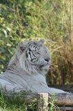 Photo de fana-des-tigres