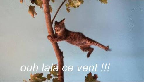 """Résultat de recherche d'images pour """"chat dans le vent"""""""