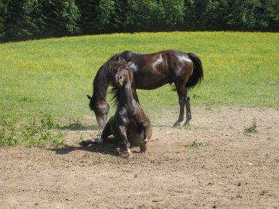 mon poney et les autres au pré.