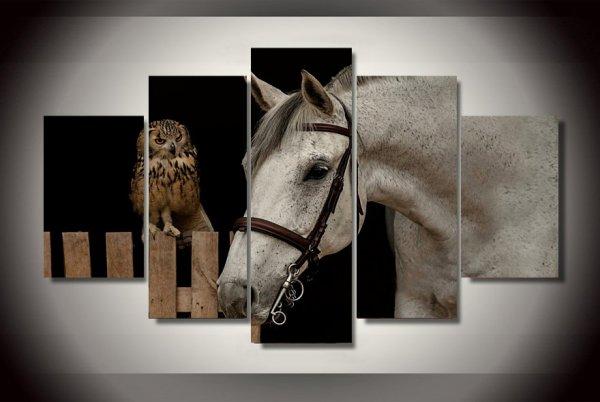 cheval / hibou