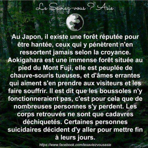Japon : La forêt hantée