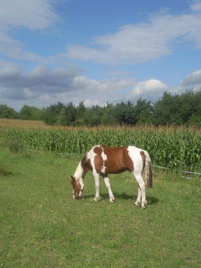 """Ci un jour on vous dit """" ce n'est qu'un cheval ne reponder pas Contenter vous de sourire ils ne peuvent comprendre"""