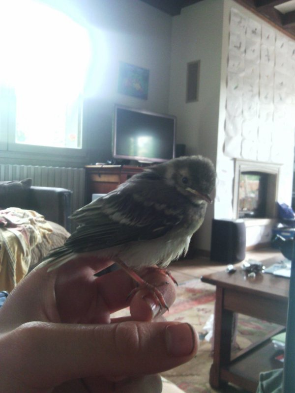 Voilà mon nouvel oiseau: Nabisca