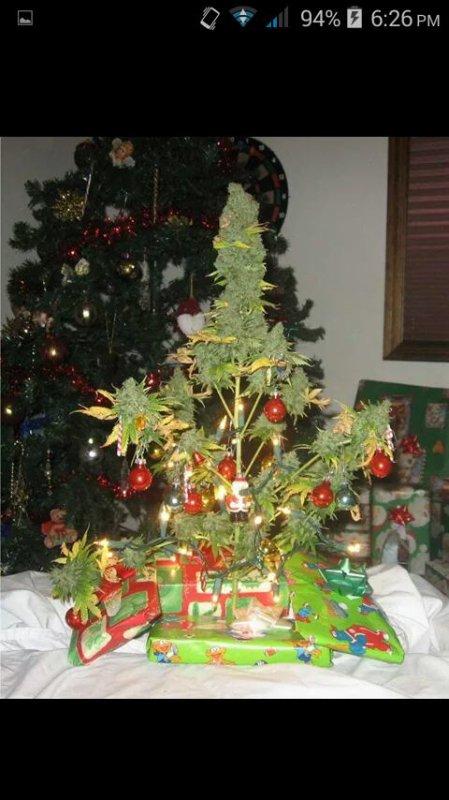 C'est Noël, le sapin est prêt ! ! ! ;)