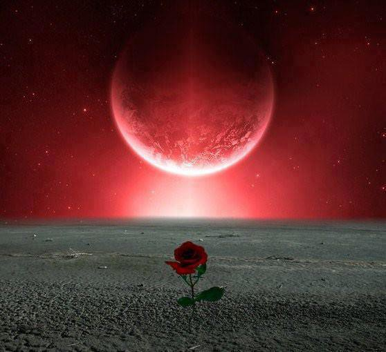red flower in the red moon