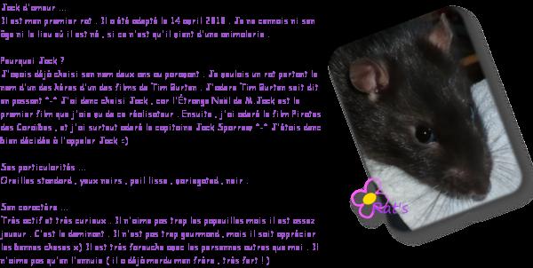 Comme vous avez été asez nombreux à voter pour un article comprenant la présentation de mes rats , voici donc en premier celle de Jack .