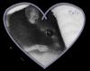 Rats-officiel