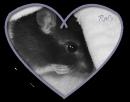 Photo de Rats-officiel