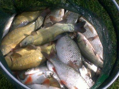 Partie de pêche loison (62)