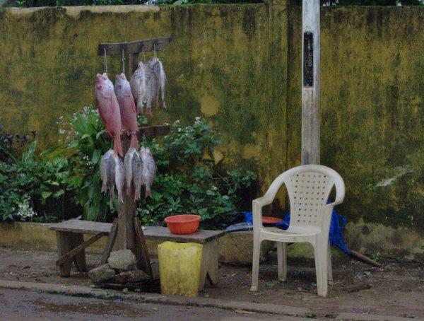 Visages de Conakry -1-
