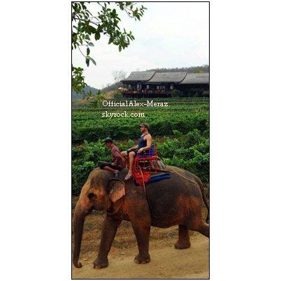 28.01.2012.: Si Alex vous demandait: '' Est-ce que c'est illégal de conduire un éléphant après avoir bu? '' Qu'est-ce que vous lui répondriez?