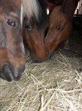 Photo de centre-equestre-rouffach