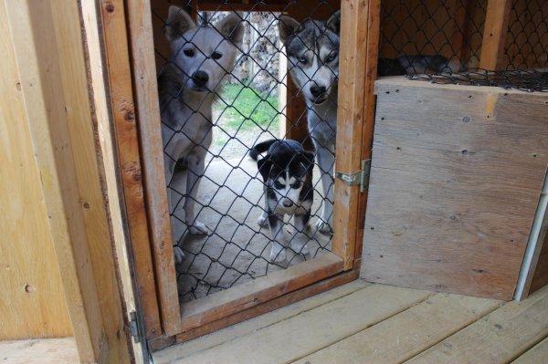 Lolita, gros loup et un de leur bebe :)