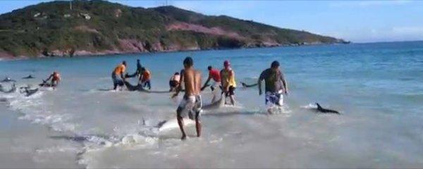 30 Dauphins sauvés par des gens formidables :$