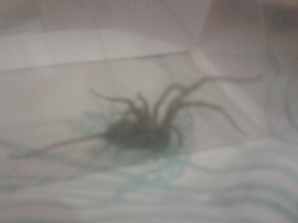 L'araignée qui ma surpris mdr x).