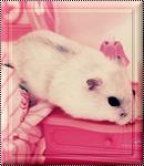 Pack 08 - Hamster