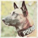 Pack 47 - Chien Policier