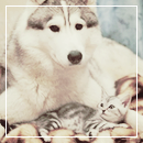 Pack 80 - Chat & Chien